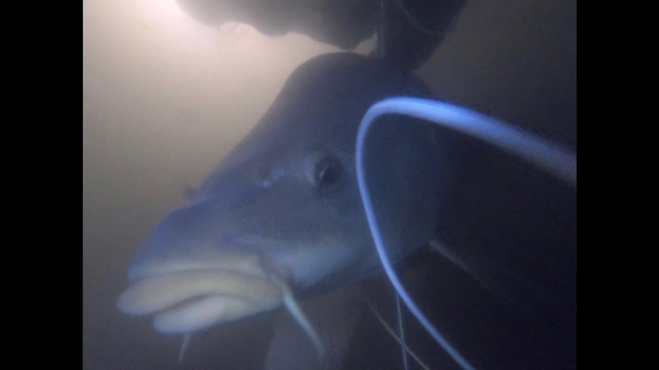 Подводная охота в корягах.Огромные сазаны и карпы. Жесть сколько рыбы в маленьком пруду. Зелинка 600