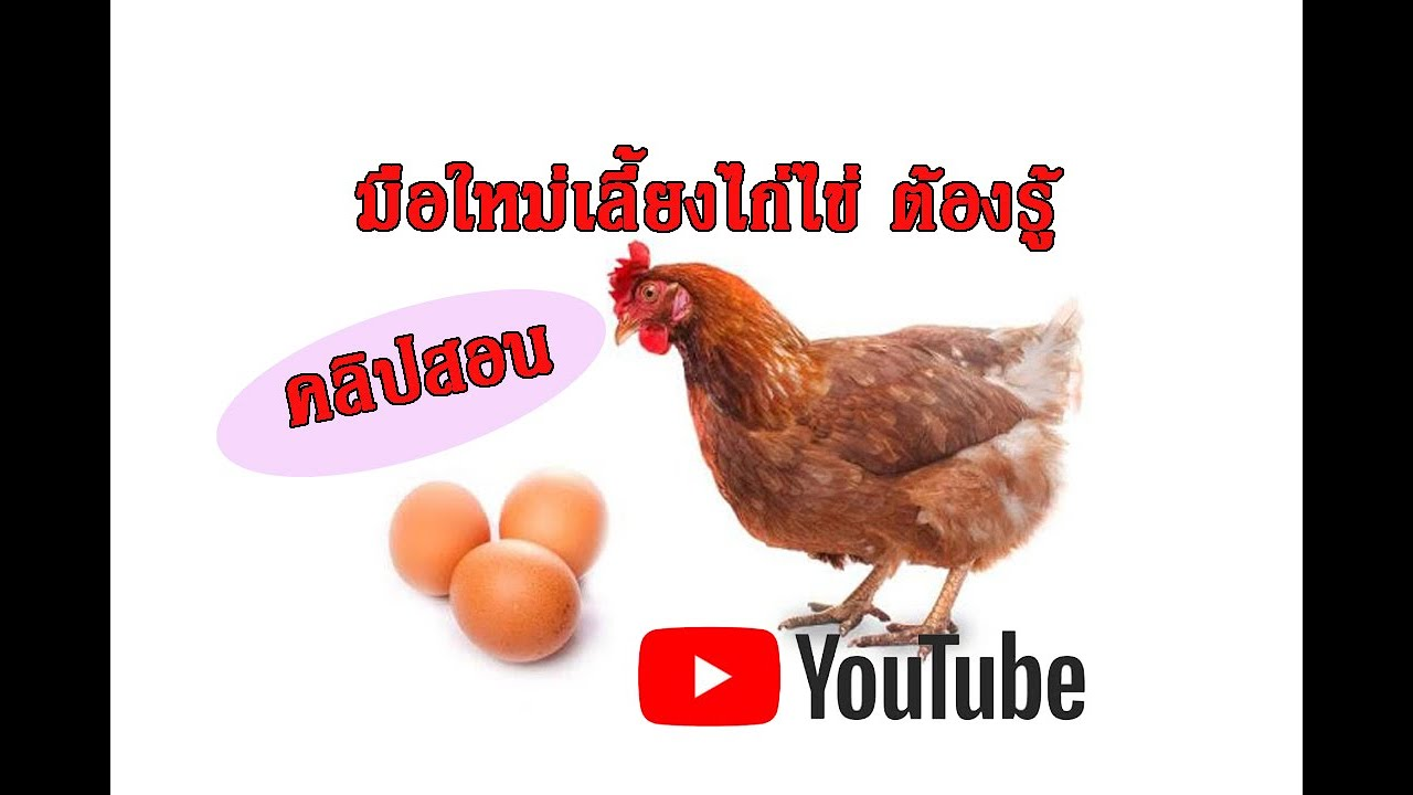 5ปัจจัยก่อนเลี้ยงไก่ไข่ (มือใหม่ต้องรู้)