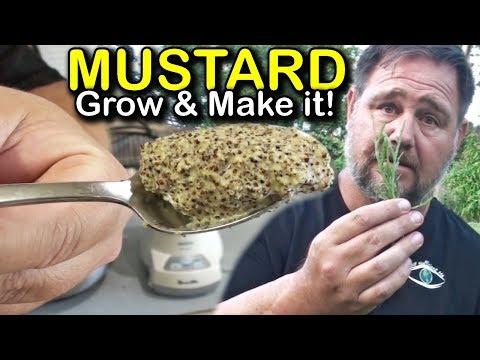How to Make Homegrown Homemade Mustard
