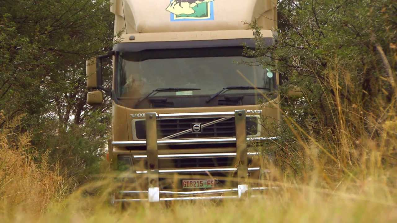 Volvo Of Savannah >> Volvo Trucks - Capturing wild buffaloes in the South