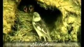 Baba Bulleh Shah Kalaam