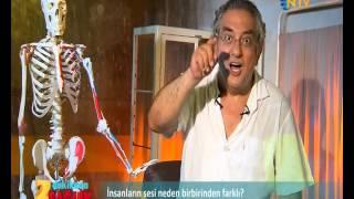 NTV İzle, 2 dakikada sağlık: Neden İnsanların Sesi Birbirinden Farklıdır?)