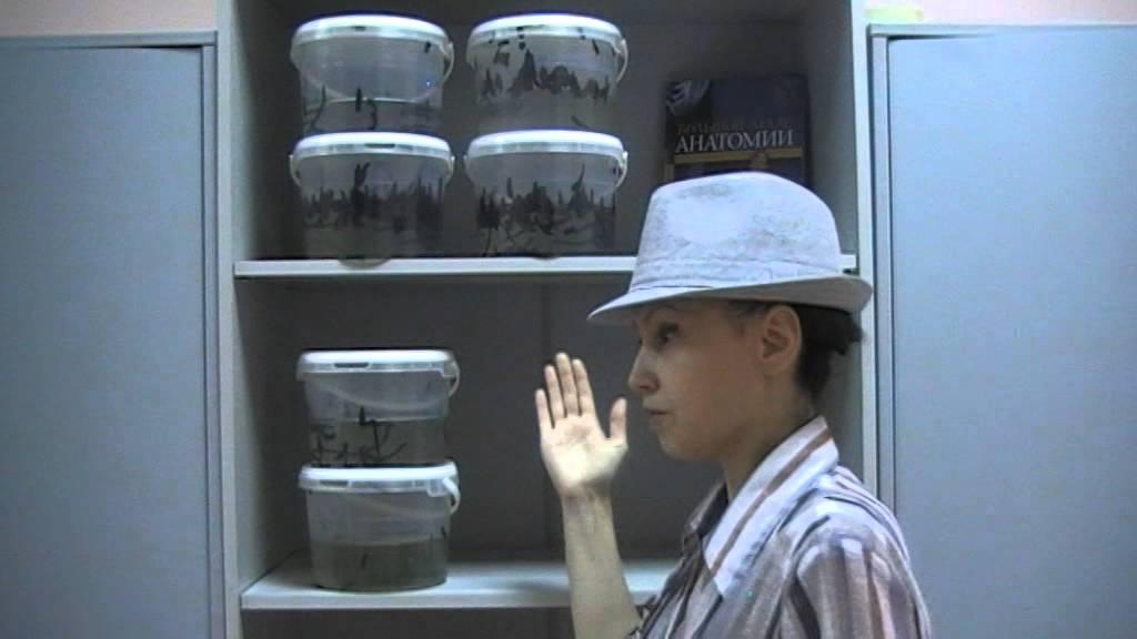 Костюм снежной королеве своими руками 115