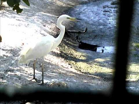 Одесский зоопарк - Птицы. (Odessa ZOO birds)