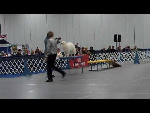 Dog Fancier's Association of Oregon - Friday, Jan 19th - Non-Sporting (Judge: Mrs MArge B Calltharp)