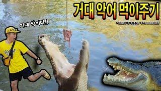 4미터 거대 악어들이 우글거리는 강에 배 타고 들어가서 먹이주기! - 허팝 (Feed Giant Crocodiles)