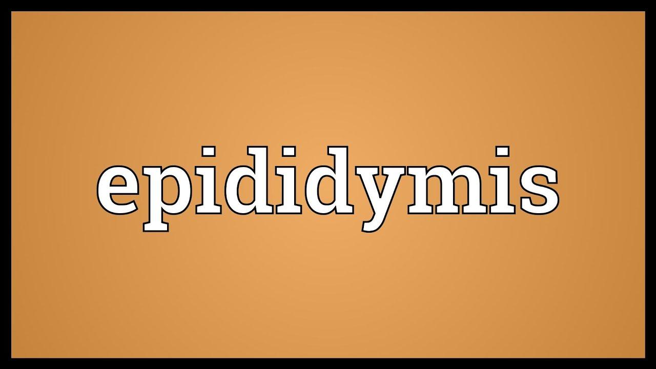 epididymis meaning - youtube, Cephalic Vein
