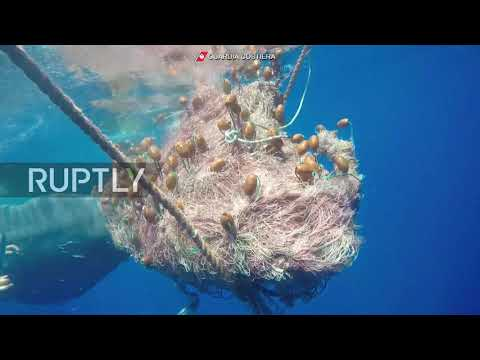 Italy: Whale trapped in fishing net freed by coast guard