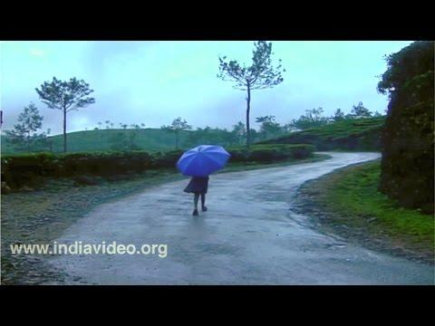 Monsoons Of Kerala