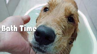 골든 리트리버 대형견 목욕 시키기 / 베란다 워터파크 / 강아지 털말리기 / 리트리버 목욕 꿀팁