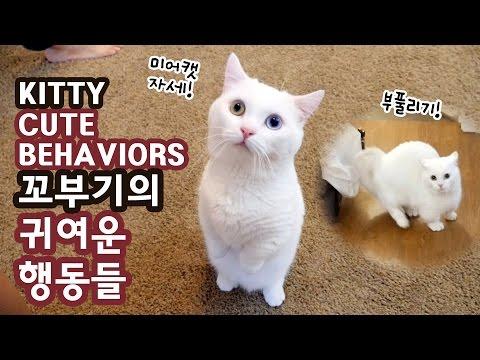 고양이 꼬부기의 귀여운 행동들 CAT CUTE BEHAVIORS