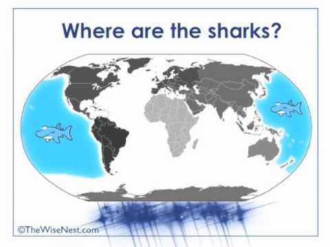 The Five Oceans - YouTube