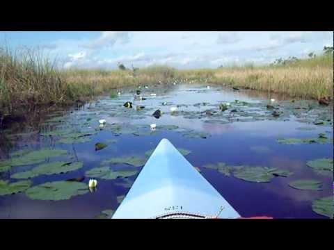 www.kayakingloon.com Flowers in Everglades