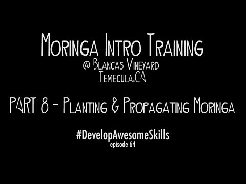 Episode 64 -  Moringa Intro Class -  Part 8 of 8 -  Planting and Propagating Moringa