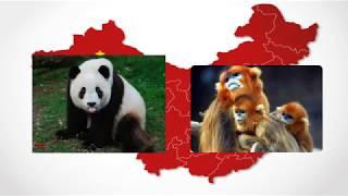 """Китайский язык с нуля. Вводный урок онлайн курса """"Hot China""""."""