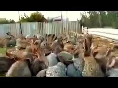 Пугливые зайцы! -)