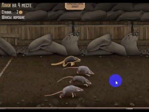 ставки на мышиные бега секреты
