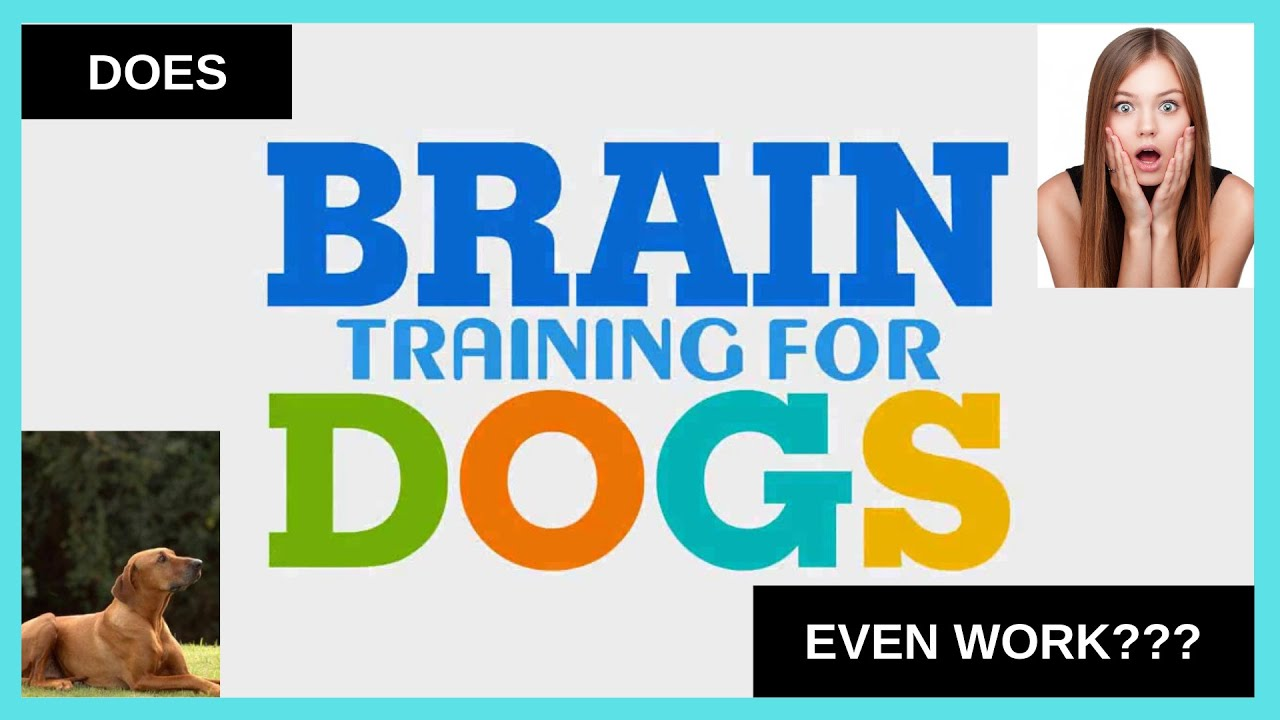 Brain Training 4 Dogs Obedience Training Commands Memorial Day Sale