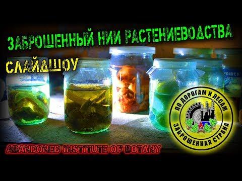 Заброшенное НИИ ботаники (Заброшенная страна - слайдшоу выпуск 2)