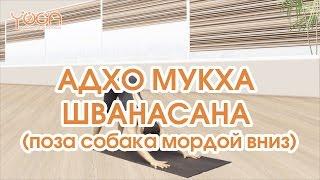 Асаны Йоги. 6. АДХО МУКХА ШВАНАСАНА (поза собака мордой вниз)