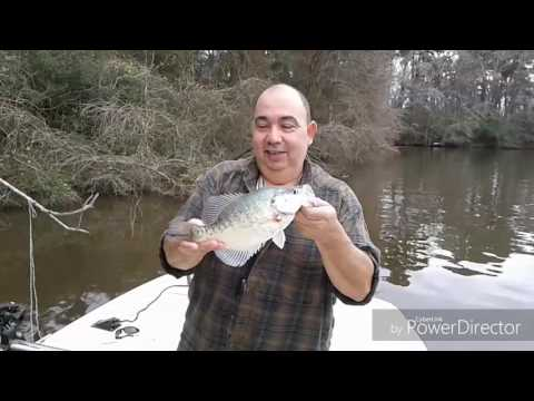 Crappie Fishing On Lake Houston