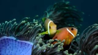 צלילה ברחבי העולם