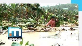 Heavy Rains In Wayanad Result In Huge Crop Losses| Mathrubhumi News