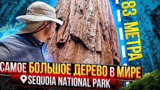 Деревья-гиганты в парке Секвойя и дорога в Долину Смерти   Путешествие по США   #24