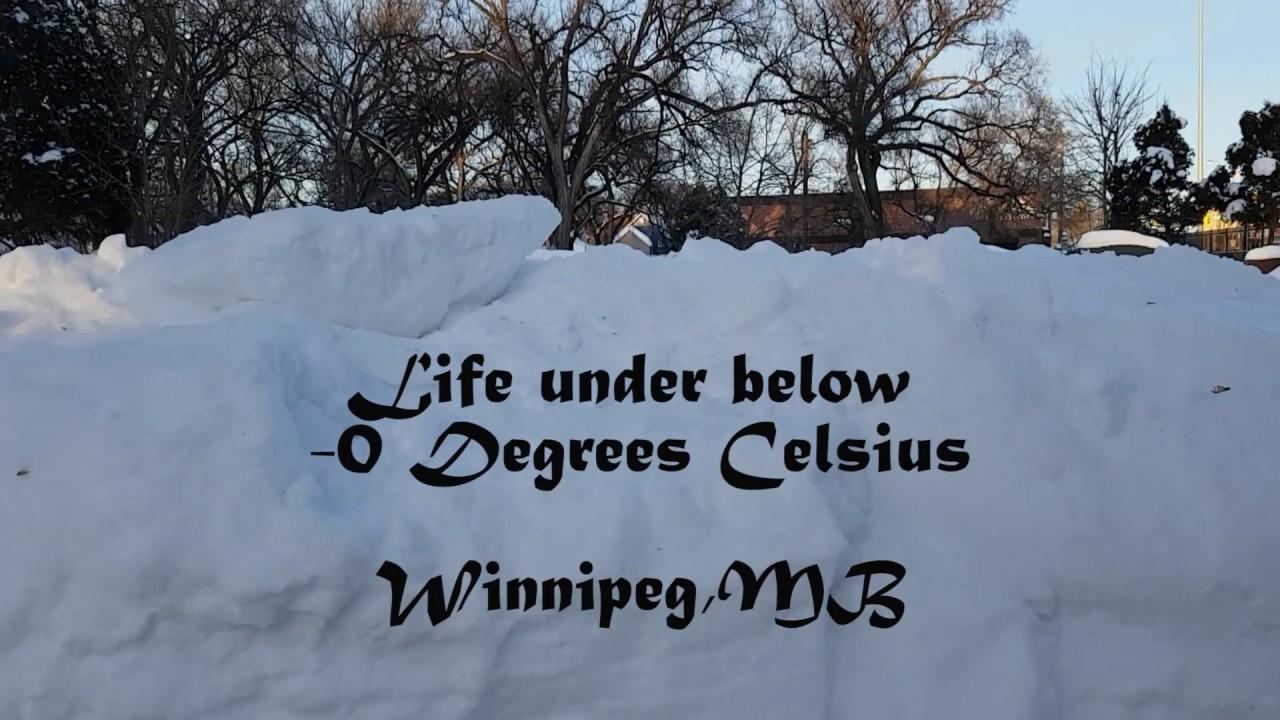 Life under below -0 degrees Celsius