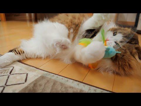 誕生日プレゼントにすさまじい戦いを繰り広げる猫