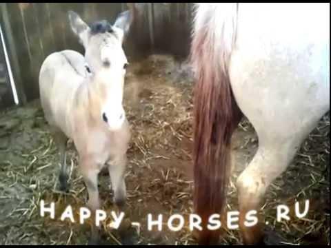 Смешные животные! Самые Смешные Лошади Видео Подборка Приколов
