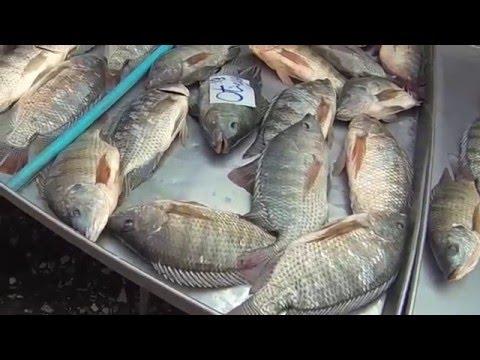 The worst of Thailand - Klong Toey market/Bangkok
