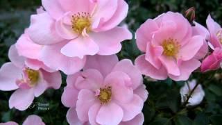 ✿ ♡ ✿The Healing Garden - Flowers -  DAVEED ✿ ♡ ✿