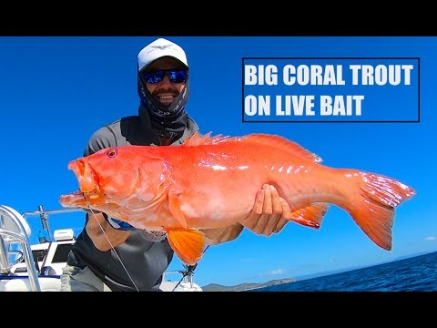 Biggest Coral Trout I've Ever Caught