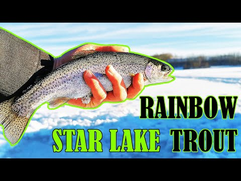 Star Lake, Alberta - Ice Fishing For Stocked Rainbow Trout