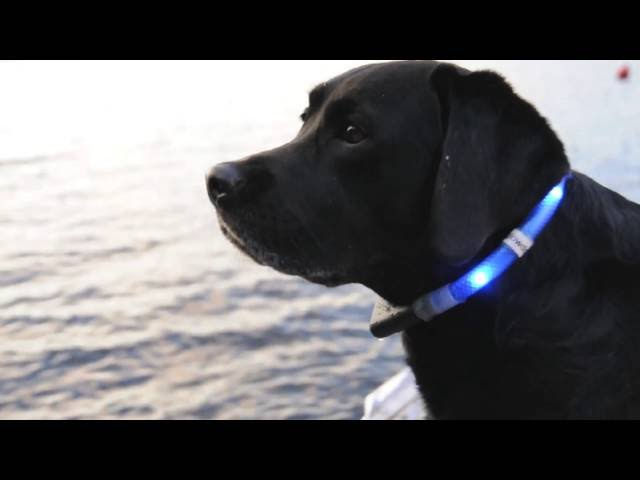 Glowdoggie - Muskoka Lake