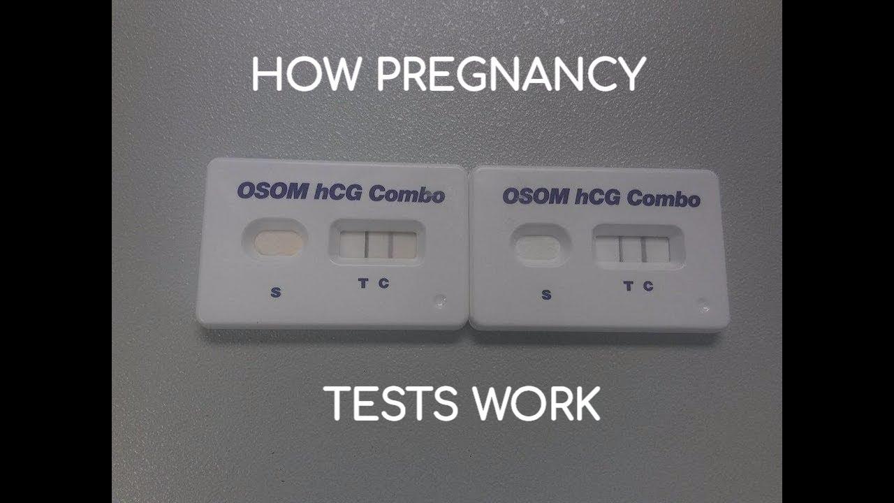 06909340cee7 How Does a Urine (  Serum) Pregnancy Test Work  OSOM hCG Combo - YouTube