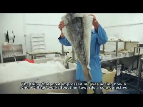 Chef Lorenzo - The secret of Icelandic cod