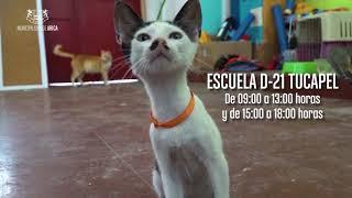 [VIDEO] Jornada de adopción animal, MUNIARICA