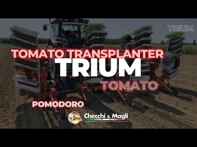 CHECCHI & MAGLI - Trapiantatrice TRIUM-6 file per Pomodoro
