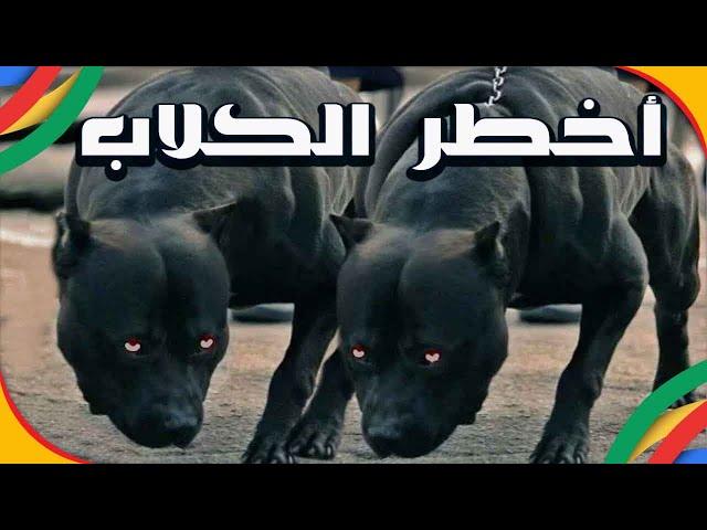 10 كلاب حراسة لن تتمنى أن تفقد معهم بمفردك
