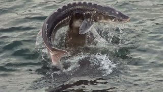 Необычный случай на рыбалке
