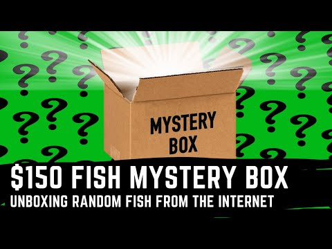 Ordering A $150 Fish Mystery Box - Random Online Fish Order