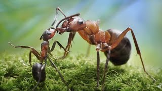 Ants Are Hard Workers /  Cameraman and editing by Sirak Ohanyan