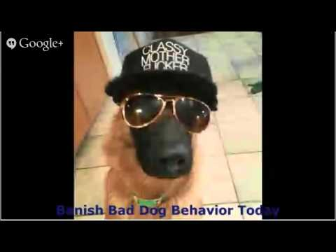 dog-training-courses-online---stop-all-unwanted-dog-behavior-dog-training-courses-online