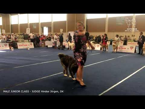 EURO DOG SHOW 2019 | MALE JUNIOR AKITA EDS | WELS, AUSTRIA | EDS 2019