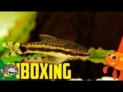 FIVE BOXES of LIVE TROPICAL FISH UNBOXING