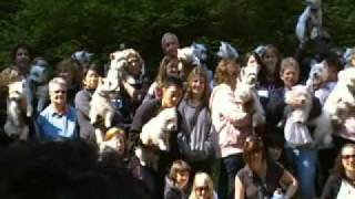 Westie Walk - Lighthouse Park - May 29th, 2011