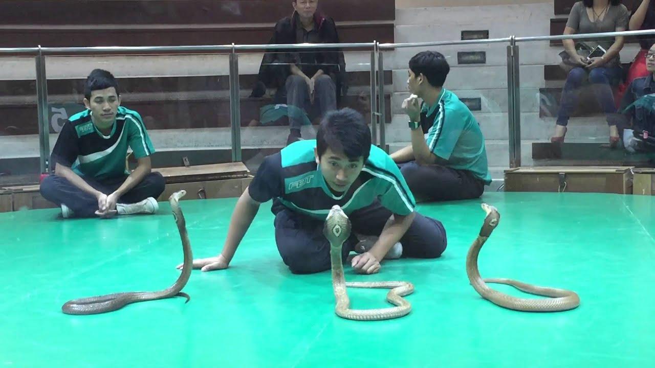 Kết quả hình ảnh cho trại rắn thái lan