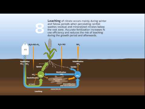 The nitrogen cycle in agriculture